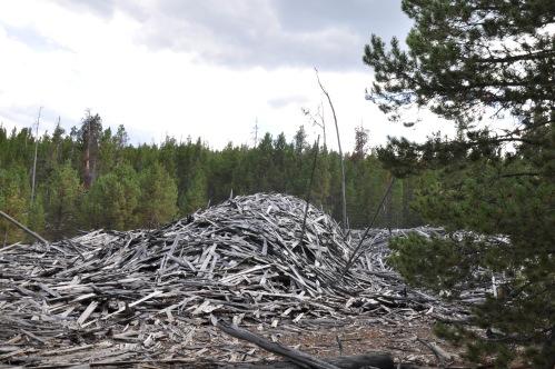 Lumber Pile Colorado