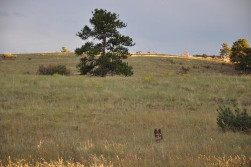 Colorado valley deer