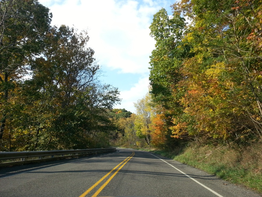 Autumn Leaves on a country road in Pennsylvania