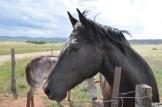Horse in Colorado