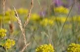 Wildflowers in Colorado