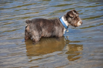 Dog in a lake.